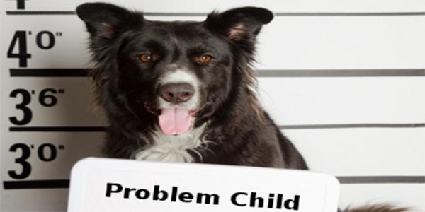 Probleemgedrag bij de hond