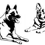 Hondenspecialist Lisa Wilkens